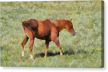 Horse On The Farm Canvas Print by Dan Sproul