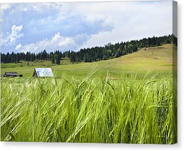 Field Of Crops Canvas Print - How Green Was My Valley by Theresa Tahara