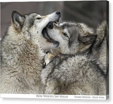 Wolf Canvas Print - How Wolves Say Hello by Rudy Pohl