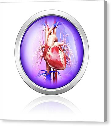 Computer Generated Canvas Print - Human Heart by Pixologicstudio