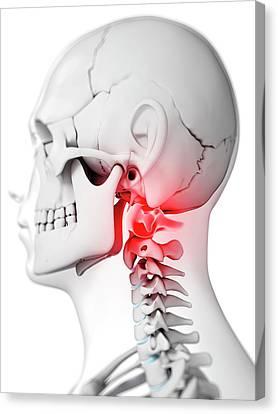 Human Neck Bones Canvas Print by Sebastian Kaulitzki