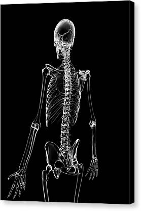 Human Skeleton Canvas Print