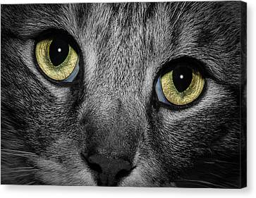 In A Cats Eye Canvas Print by Doug Long