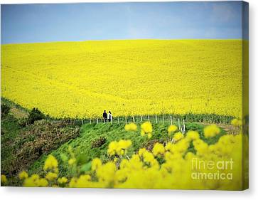 Rapeseed Field... Love Story Canvas Print
