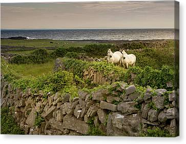 Inishmore Island Canvas Print by Tom Norring