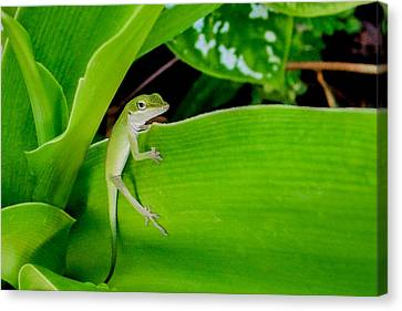Canvas Print featuring the photograph It's Easy Being Green by TK Goforth