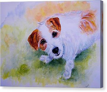 Jack Russell - Portrait - Play Ball Canvas Print by Carolyn Gray