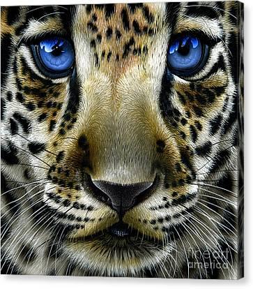 Jaguar Cub Canvas Print