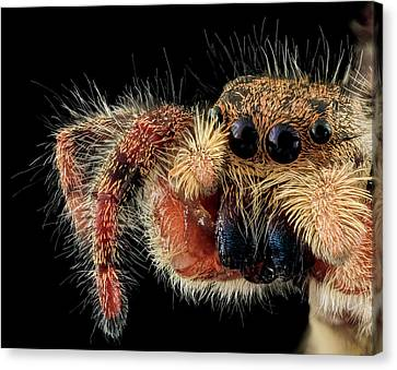 Jumping Spider Canvas Print by Us Geological Survey