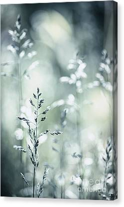June Grass Flowering Canvas Print