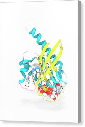K-ras Benzamidine And Gtp Complex Canvas Print by Ramon Andrade 3dciencia