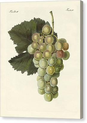 Kinds Of Vines Canvas Print