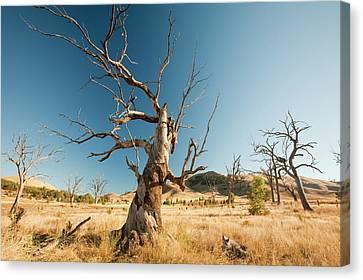 Dry Lake Canvas Print - Lake Eildon In Drought by Ashley Cooper
