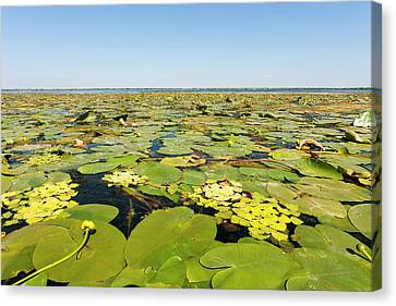 Flooding Canvas Print - Lake In The Danube Delta, Romania by Martin Zwick