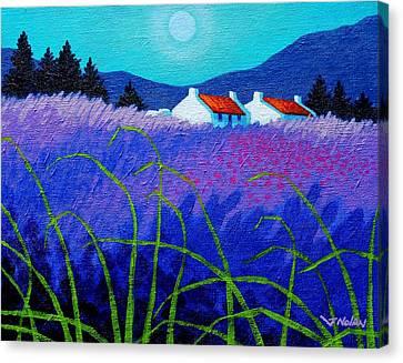Lavender Field Canvas Print by John  Nolan