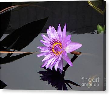 Lavender Lily Canvas Print by Eric  Schiabor