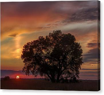 Canvas Print featuring the photograph Light Pillar And Cottonwood by Rob Graham