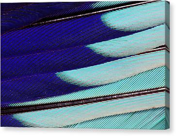 Lilac Breasted Roller Feathers Pattern Canvas Print