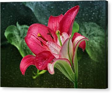 Lilies Canvas Print by Manfred Lutzius