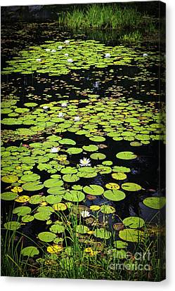 Lily Pads On Dark Water Canvas Print by Elena Elisseeva