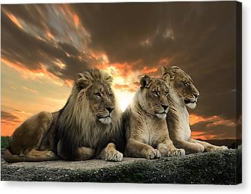 Lions Canvas Print