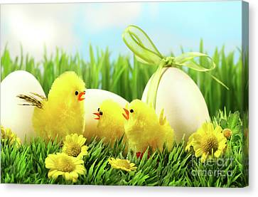 Little Yellow Easter Chicks In The Tall Grass  Canvas Print by Sandra Cunningham