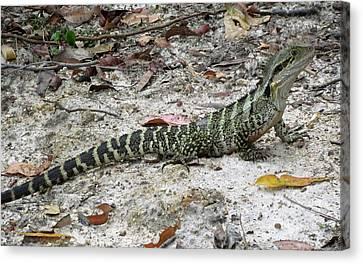 Lizard  Canvas Print by Joyce Woodhouse