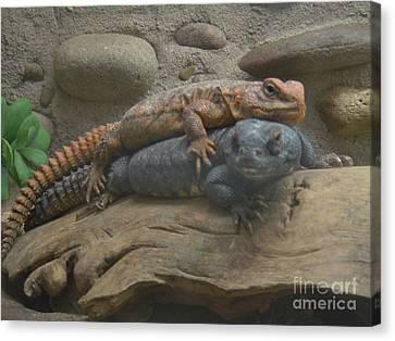 Canvas Print featuring the photograph Lizard Love by Carla Carson
