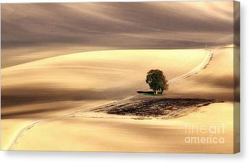 Lonely Tree Canvas Print by Jaroslaw Blaminsky