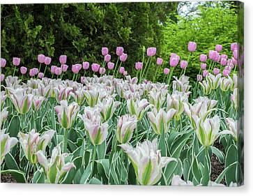 Perennial Canvas Print - Longwood Gardens, Spring Flowers by Lisa S. Engelbrecht