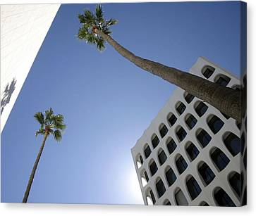Canvas Print featuring the photograph Looking Up In Beverly Hills by Cora Wandel