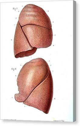 Lung Anatomy Canvas Print