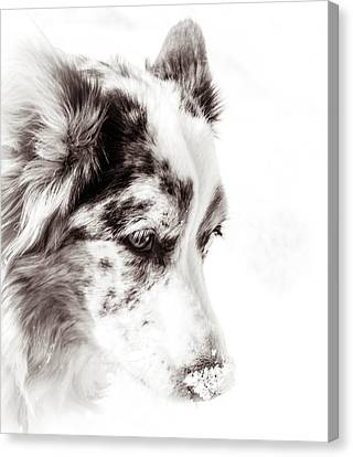 Maggie Canvas Print by Cathy Donohoue