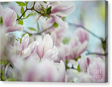 Pastel Canvas Print - Magnolia Flowers by Nailia Schwarz