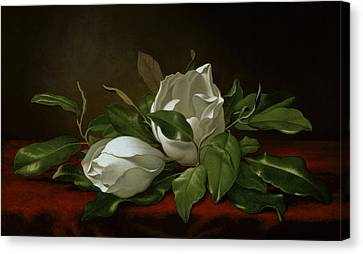 Magnolia Canvas Print by Martin Johnson Heade