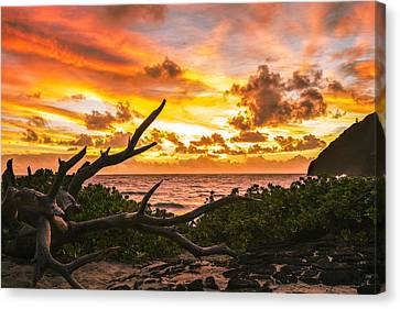 Makapuu Sunrise 4 Canvas Print by Leigh Anne Meeks