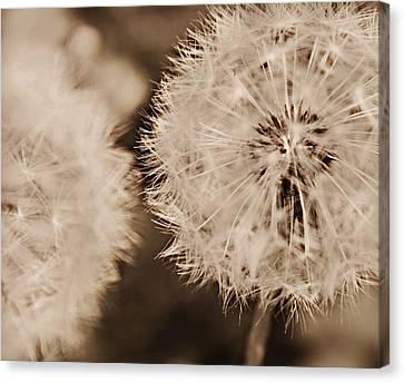 Make A Wish Canvas Print by Candice Trimble