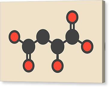 Malic Acid Fruit Acid Molecule Canvas Print by Molekuul