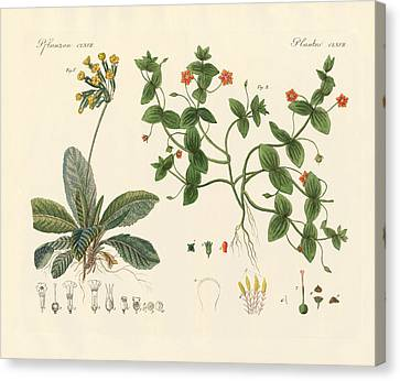 Medical Plants Canvas Print