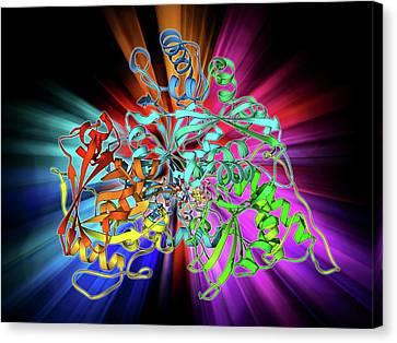 Metabolic Enzyme Molecule Canvas Print by Laguna Design