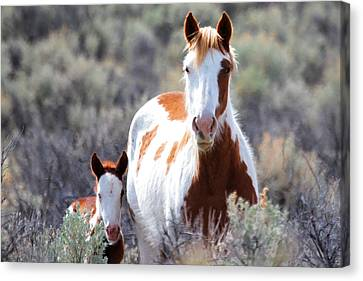 Momma And Baby In The Wild Canvas Print by Athena Mckinzie