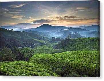 Morning At Cameron Highlands Canvas Print by Ng Hock How