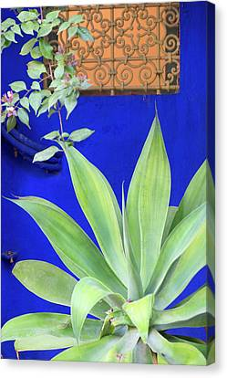 Morocco, Marrakech, Jacques Majorelle Canvas Print by Emily Wilson
