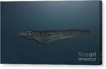 Mosasaur Swimming In Prehistoric Waters Canvas Print by Kostyantyn Ivanyshen