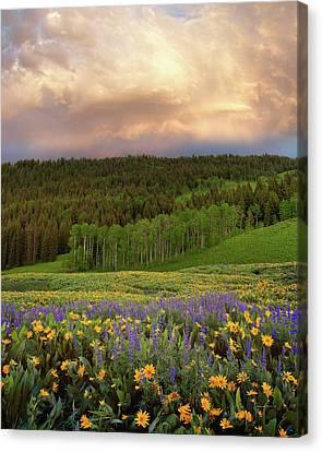 Mountain Color Canvas Print by Leland D Howard