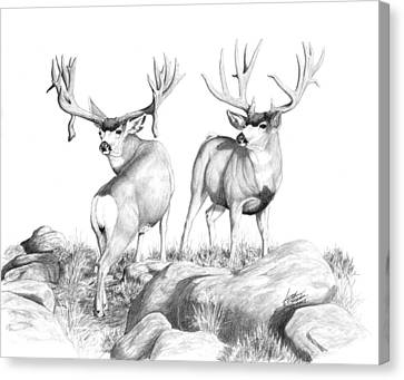 2 Muley Bucks Canvas Print