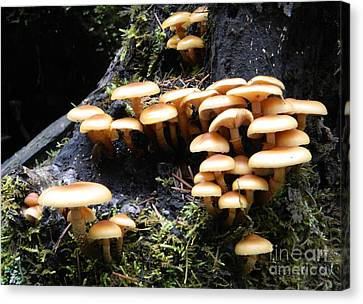 Mushrooms On A Stump Canvas Print by Chalet Roome-Rigdon