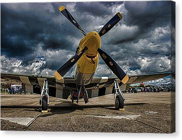 Mustang Canvas Print by Martin Newman