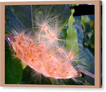 Delicate Canvas Print - Nature's Mystery  by Basant Soni