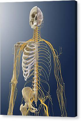 Nervous System, Artwork Canvas Print